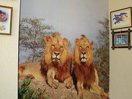 Фотообои «Львы в саванне» в детской комнате